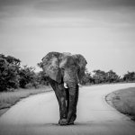 Elephant we spotted on one of our safaris