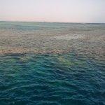 reef a torfa