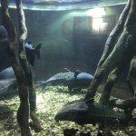 Oceanarium Foto