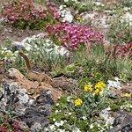 Chipmunk and wildflowers