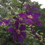 Фотография Ботанический сад-институт