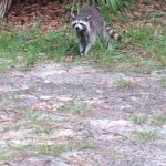 Foto de Juniper Springs Recreation Area