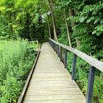 Asbury  Woods