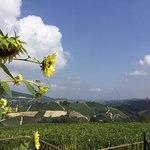 Foto di Amalia Cascina in Langa