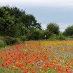Beautiful meadow in June