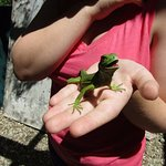 Little cute smiling iguana