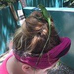 Little iguana exploring her bun- he thought he was king of the mountain!