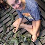 Feeding so many iguanas!
