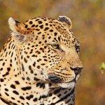 Imagen de Londolozi Private Game Reserve
