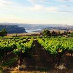 Foto de Cave B Estate Winery & Resort