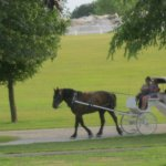 Carriage rides for 7.00