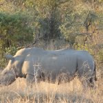 Foto de Rhino Walking Safaris at Plains Camp