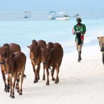 Photo of Langi Langi Beach Bungalows