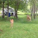Foto de Big Meadows Campground
