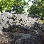 Foto van Rhododendron Trail