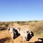 Foto de Okambara Elephant Lodge