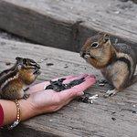 Cute little fellas