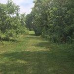 Nice grass Path