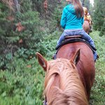 Riding through the Gallatin National Forest