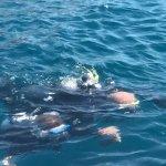 Photo of Port Frejus Plongee