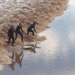 Tidal Bore surfers on the Petitcodiac River at Moncton, NB
