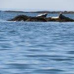 Foto de Great Wass Archipelago