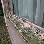 Rebords de fenêtre du logement