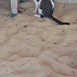The island cat