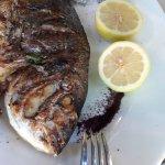 Photo of Dag Al HaDan Restaurant