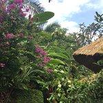 Photo of Bali Agung Village