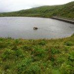 Bärenmutter am Fluss