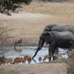 Fun at the hide with the elephant