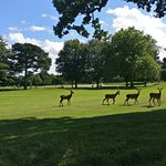 Photo of Wollaton Hall and Park