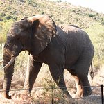 Foto di Ivory Tree Game Lodge