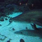 Aquarium Finisterrae Foto