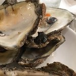 Oysters !!