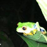 Arenal Eco Zoo resmi