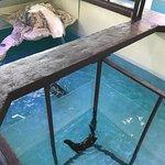 Photo of Clearwater Marine Aquarium