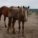 Foto de The Black Hills Wild Horse Sanctuary