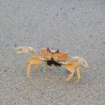 Some crabby guy I met, lol