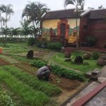 Great Vegetable Garden