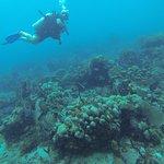 Diving near Catalina Island.