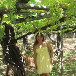 In the vineyard next to about a 250 year old root :)