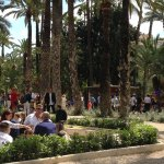Palm Groves (Palmeral) of Elche Photo