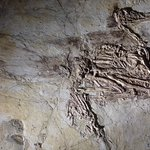Feathered fossil
