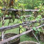 Photo de Tropical Fruit Farm