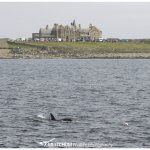 An orca passing by in front of the hotel