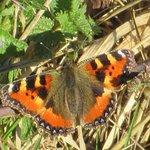 Foto de Hatfield Forest Nature Reserve