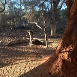 Photo de Alice Springs Desert Park