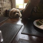 Fantastic pub that allowed out little pooch in whilst we eat a scrummy yummy meal
